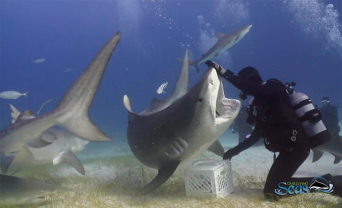 Requins with Vincent Canabal de George Willis